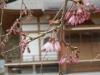 04/01 松之郷・願成就寺3