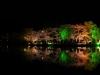 八鶴湖 夜桜ライトアップ2