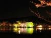八鶴湖 夜桜ライトアップ7