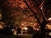 八鶴湖 夜桜ライトアップ10