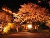 八鶴湖 夜桜ライトアップ12