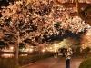 八鶴湖 夜桜ライトアップ14
