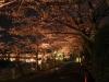 八鶴湖 夜桜ライトアップ18