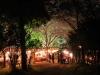 八鶴湖 夜桜ライトアップ19