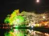 八鶴湖 夜桜ライトアップ21