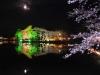八鶴湖 夜桜ライトアップ22