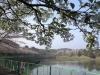 日吉台 桜ヶ池