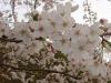 日吉台桜ヶ池2