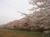日吉台桜ヶ池3