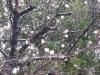 東金中央公園のソメイヨシノ1