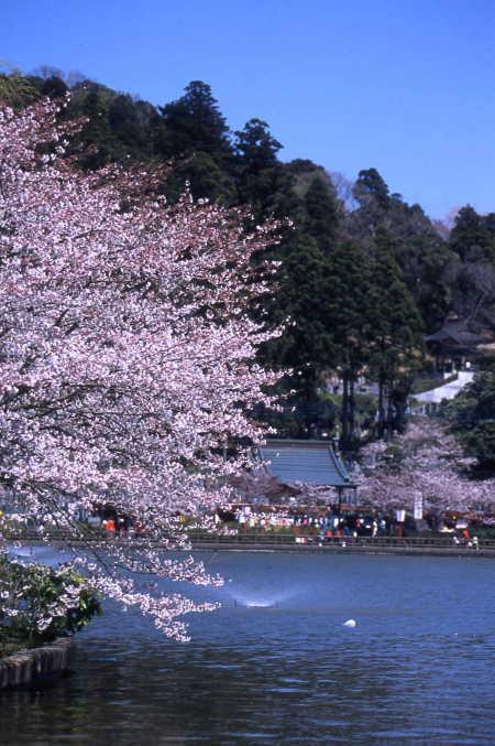 湖畔弁天島から最福寺