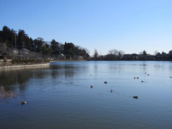 一月の八鶴湖