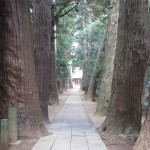 日吉神社参道の杉並木1