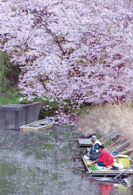 春の岩川池