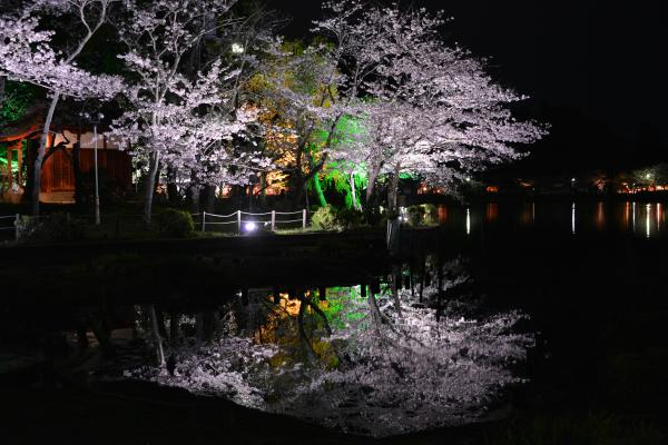 特選 「水鏡」山岡利匡