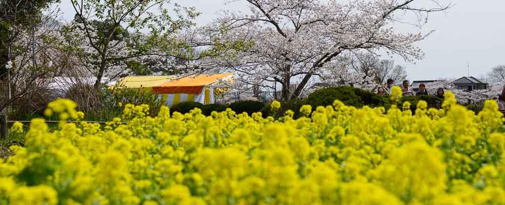 桜の都東金 写真コンクール